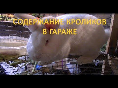 Содержание кроликов в гараже
