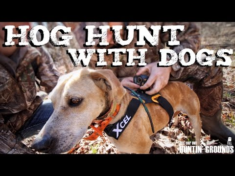 Hog Hunting With Dogs  Vlog #11