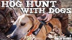 Hog Hunting With Dogs  Vlog #11