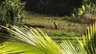 Madagascar:  Tourisme Ile Sainte Marie