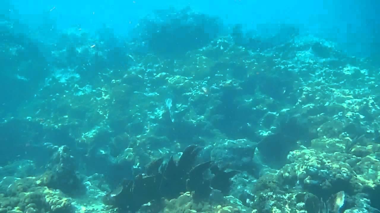 nurse shark, sombrero light house reef, snorkeling, marathon