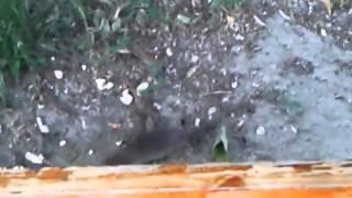 Loc de joacă din Galaţi plin de şobolani