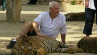 Gambar cover Tiger-Tempel in Thailand im Visier von Tierschützern