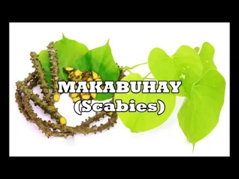 Herbs for Life: MAKABUHAY (Scabies) - YouTube