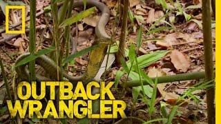 World's Largest Venomous Snake | Outback Wrangler