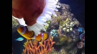 Finding Nemo (kayip balik nemo)