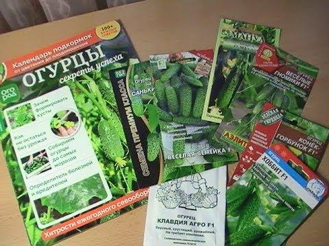 ОГУРЦЫ 2020 для лучшего урожая