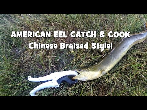 """EEL CATCH & COOK! """"Chinese Style"""" Braised Fish! (South Kingstown/Philadelphia, RI/PA)"""