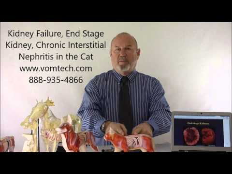 Kidney Failure, End Stage Kidney, Chronic Interstitial Nephritis In The Cat