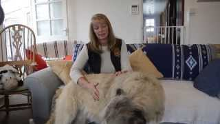 How to Train Your Dog to Sit | Woof House Videos