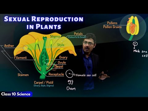Sexual Reproduction in Plants | CBSE Class 10 Science