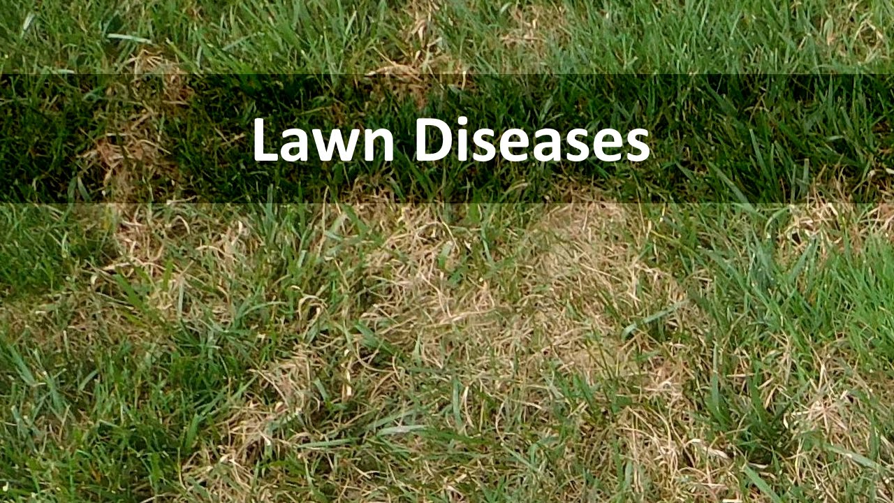 how to get rid of brown patch fungus on lawn