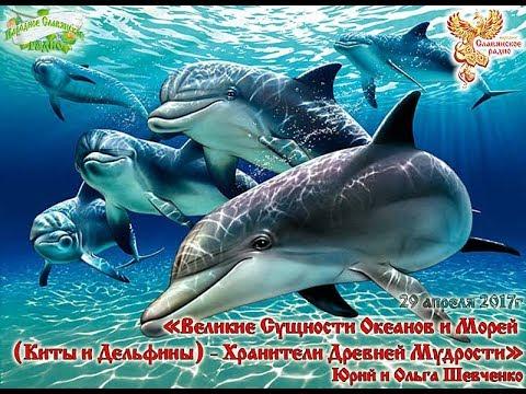 Великие Сущности Океанов и Морей Киты и Дельфины – Хранители Древней Мудрости