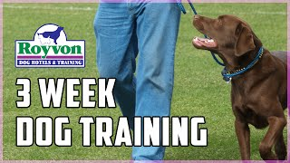 3 Week Residential Dog Training Program At Royvon