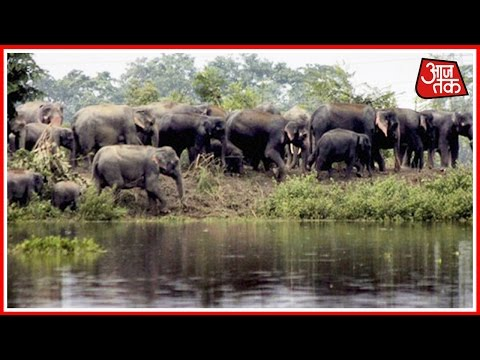 Animals Suffer Due To Floods In Kaziranga National Park