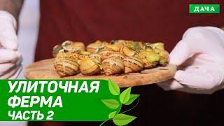 Удачный бизнес: Улиточная ферма в Украине   Разведение и выращивание улиток   Бизнес идеи. Часть 2