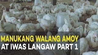 Manukang Walang Amoy at Iwas Langaw: Introduction and Benefits | Agribusiness Broiler Farming Part 1