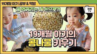♥ 아기도 할 수 있다! 유기농 콩나물 키우기