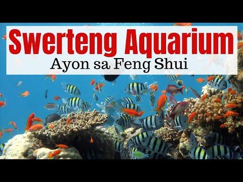 PAMPASWERTE   Saan Dapat Ilagay Ang Aquarium Sa Bahay   Tamang Pwesto Ng Aquarium For Good Feng Shui