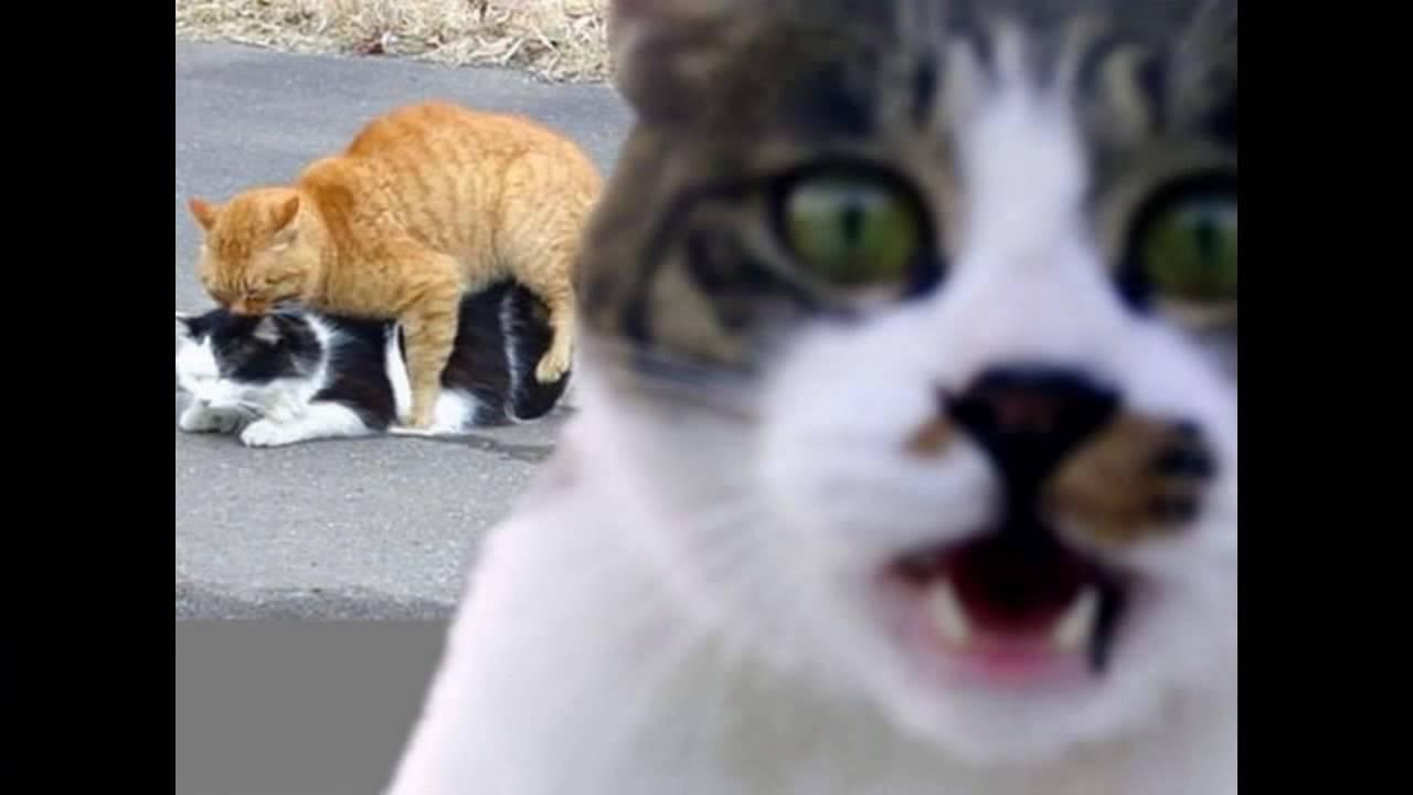 Картинки с юмором коты