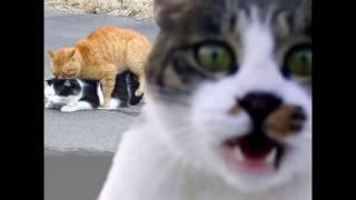 Котеги зажигають Cat Кошки прикол юмор смех Пушной