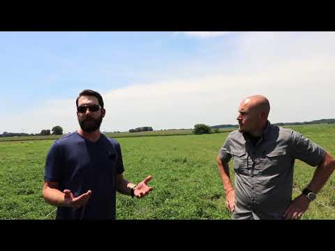 New Farmer Challenges - Pigs on Pasture, Grazing, and The Reality of It All