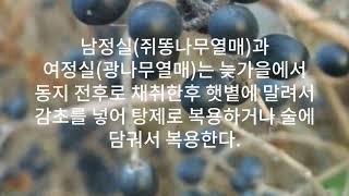 광나무열매(여정실)와 남정목(쥐똥나무 열매)의 놀라운 …