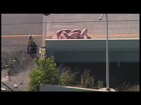 Raw: Pigs Shut Down Kentucky Highway
