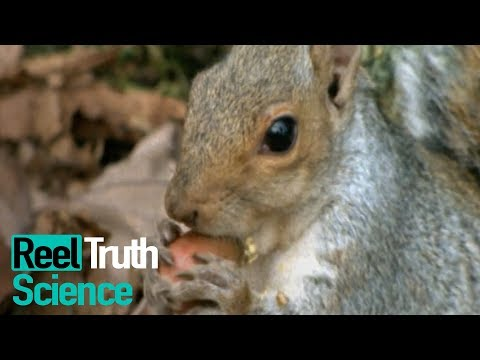 Animals Did It First - How Do Animals Build Habitats? | Science Documentary | Reel Truth Science
