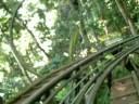 Xe trượt tại thác Đatala,Đà Lạt
