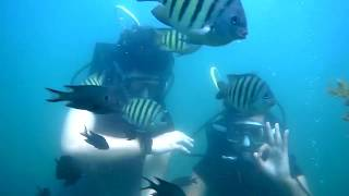 life's first scuba diving