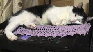 프린터를 점령한 고양이