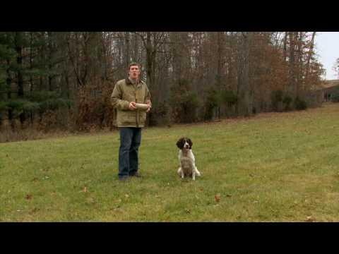 AHTV - How to Teach Your Dog to Retrieve