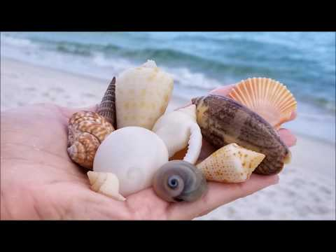 Snorkeling for seashells in Navarre Beach, FL June 09, 2018