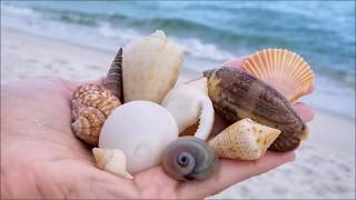 Snorkeling for seashells in Navarre Beach, FL June 09, 2018