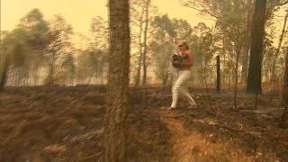 Woman saves koala from brushfires