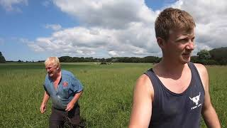 what-do-we-do-with-the-3-6-acre-patch-chop-it-bales