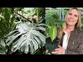 The Mysteries Of Monstera Deliciosa A Beginner S Guide To Growth And Care Kicau Mania(.mp3 .mp4) Mp3 - Mp4 Download