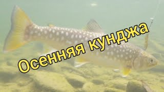 Осенняя кунджа. Ловля кунджи вблизи дома. Подводная съемка. Сахалинская рыбалка & Sakhalin fishing