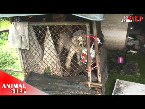 Two Abandoned Dogs Get Chance for Good Life Again