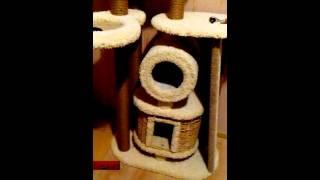почему домик для кошки должен быть плетеный??!!!