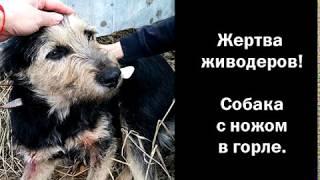 Собаку с ножом в горле нашли на улице в Челябинске