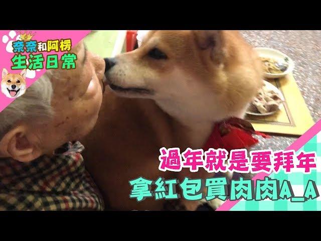 【柴犬Nana(奈奈)】過年就是要拜年!拿紅包買肉肉!!