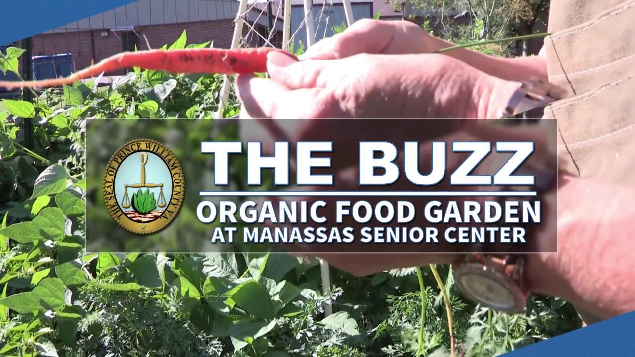 Food garden pictures - The Buzz Organic Food Garden At Manassas Senior Center