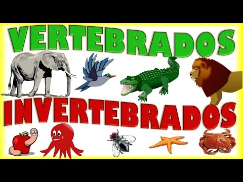 Animales Vertebrados e Invertebrados para Niños, Vertebrate & Invertebrate Animals for kids