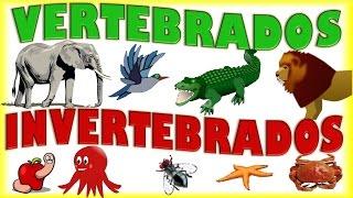 Animales Vertebrados e Invertebrados para Niños, Vertebrate & Invertebrate Animals for kids