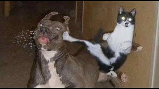 Compilation of cats and dogs just being bad
