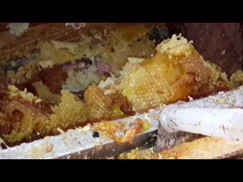 Как правильно сделать отводок пчел фото 187