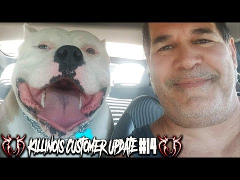 AMERICAN BULLY PUPPY CUSTOMER UPDATE #14 FROM THE WORLD FAMOUS KILLINOIS KENNELS