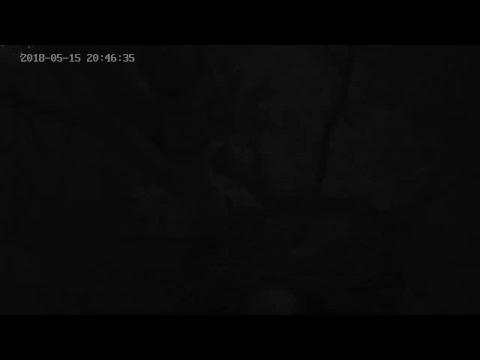 Rétisas fészekkamera - DDNPI - White-tailed Eagle nest